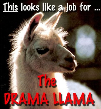 If an actual llama appeared during drama situations, my quality of life would be drastically improved.